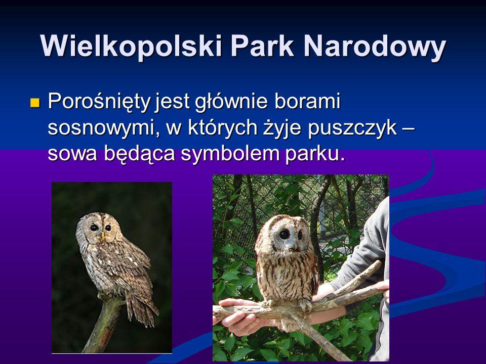 Wielkopolski Park Narodowy Porośnięty jest głównie borami sosnowymi, w których żyje puszczyk – sowa będąca symbolem parku. Porośnięty jest głównie bor
