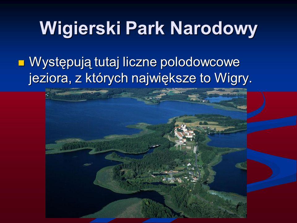 Wigierski Park Narodowy Występują tutaj liczne polodowcowe jeziora, z których największe to Wigry. Występują tutaj liczne polodowcowe jeziora, z który
