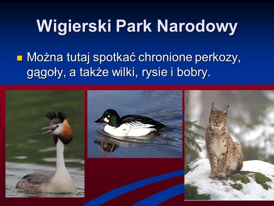 Wigierski Park Narodowy Można tutaj spotkać chronione perkozy, gągoły, a także wilki, rysie i bobry. Można tutaj spotkać chronione perkozy, gągoły, a