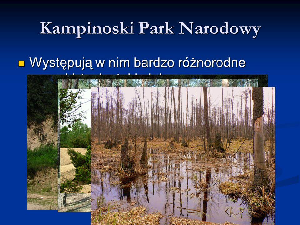 Kampinoski Park Narodowy Występują w nim bardzo różnorodne warunki życia, takie jak: Występują w nim bardzo różnorodne warunki życia, takie jak: polod