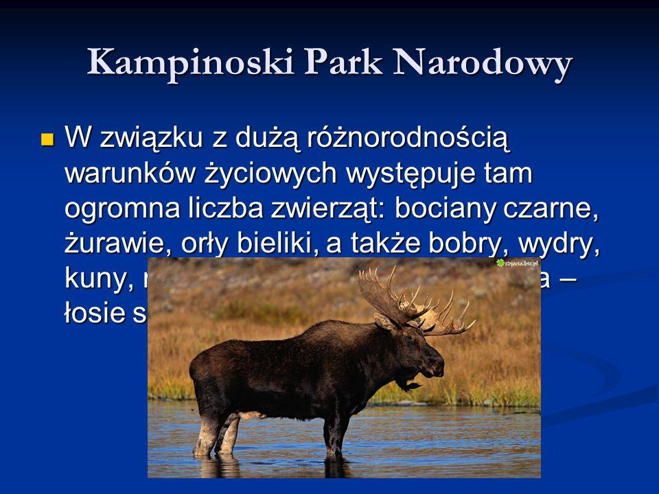 Kampinoski Park Narodowy W związku z dużą różnorodnością warunków życiowych występuje tam ogromna liczba zwierząt: bociany czarne, żurawie, orły bieli