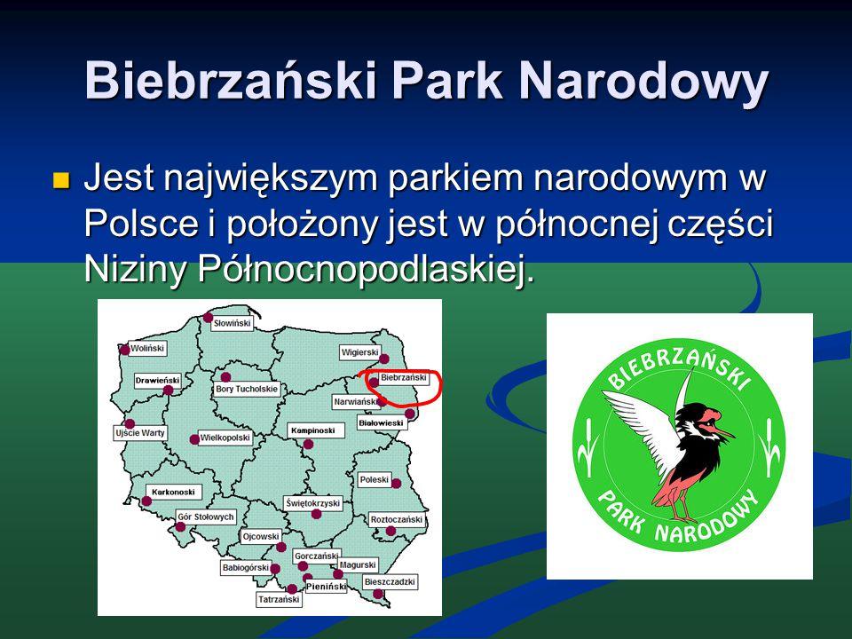 Biebrzański Park Narodowy Jest największym parkiem narodowym w Polsce i położony jest w północnej części Niziny Północnopodlaskiej. Jest największym p
