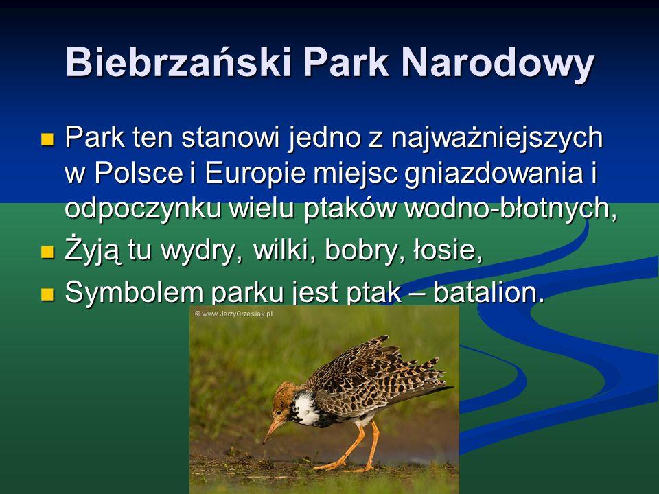 Biebrzański Park Narodowy Park ten stanowi jedno z najważniejszych w Polsce i Europie miejsc gniazdowania i odpoczynku wielu ptaków wodno-błotnych, Pa