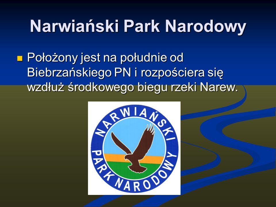 Narwiański Park Narodowy Położony jest na południe od Biebrzańskiego PN i rozpościera się wzdłuż środkowego biegu rzeki Narew. Położony jest na połudn