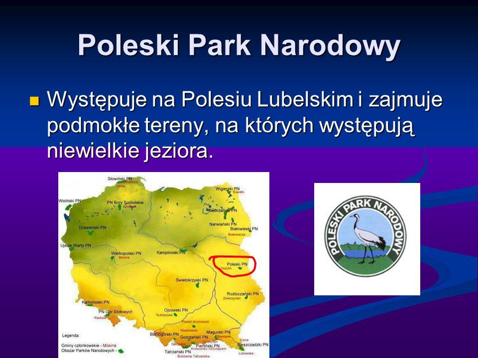 Poleski Park Narodowy Występuje na Polesiu Lubelskim i zajmuje podmokłe tereny, na których występują niewielkie jeziora. Występuje na Polesiu Lubelski