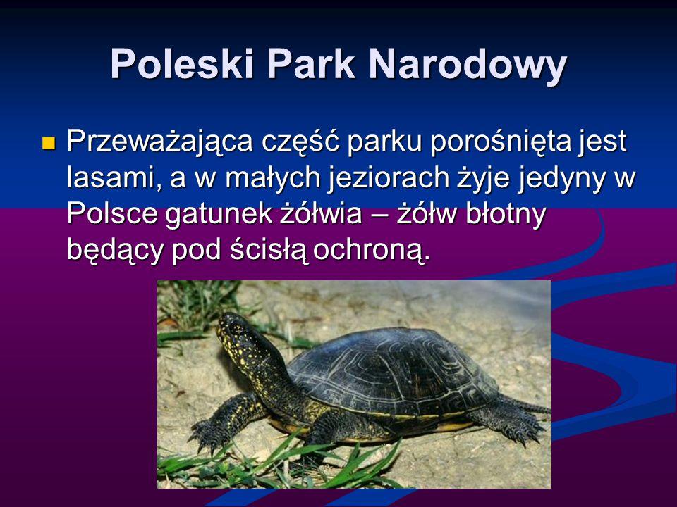 Poleski Park Narodowy Przeważająca część parku porośnięta jest lasami, a w małych jeziorach żyje jedyny w Polsce gatunek żółwia – żółw błotny będący p