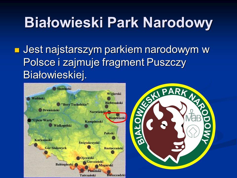 Białowieski Park Narodowy Jest najstarszym parkiem narodowym w Polsce i zajmuje fragment Puszczy Białowieskiej. Jest najstarszym parkiem narodowym w P