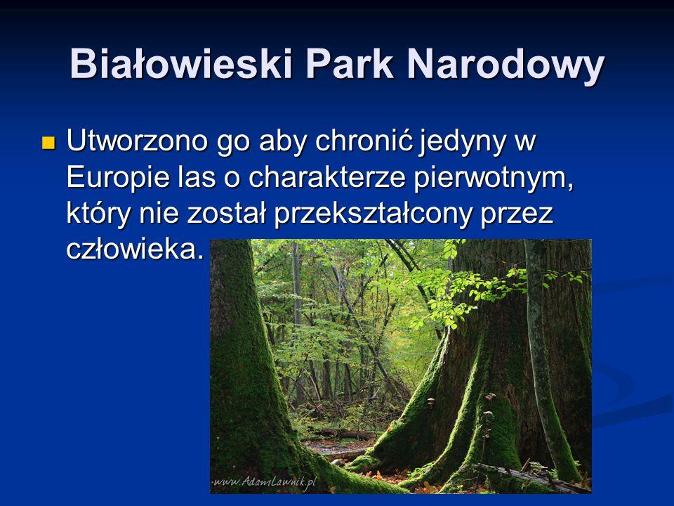 Utworzono go aby chronić jedyny w Europie las o charakterze pierwotnym, który nie został przekształcony przez człowieka. Utworzono go aby chronić jedy