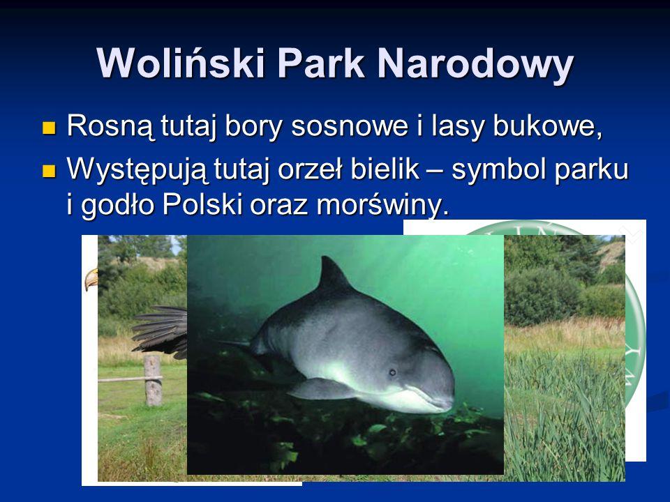 Woliński Park Narodowy Rosną tutaj bory sosnowe i lasy bukowe, Rosną tutaj bory sosnowe i lasy bukowe, Występują tutaj orzeł bielik – symbol parku i g