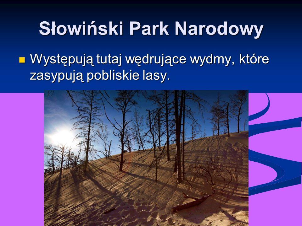 Słowiński Park Narodowy Występują tutaj wędrujące wydmy, które zasypują pobliskie lasy. Występują tutaj wędrujące wydmy, które zasypują pobliskie lasy