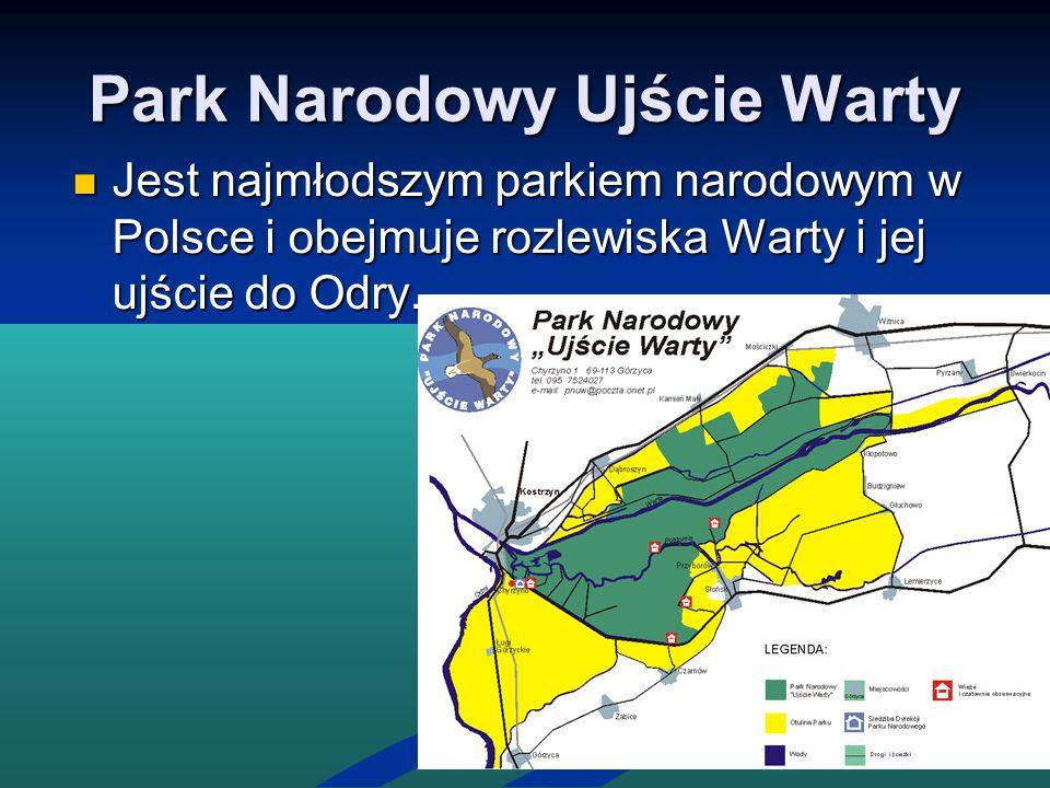Park Narodowy Ujście Warty Jest najmłodszym parkiem narodowym w Polsce i obejmuje rozlewiska Warty i jej ujście do Odry. Jest najmłodszym parkiem naro