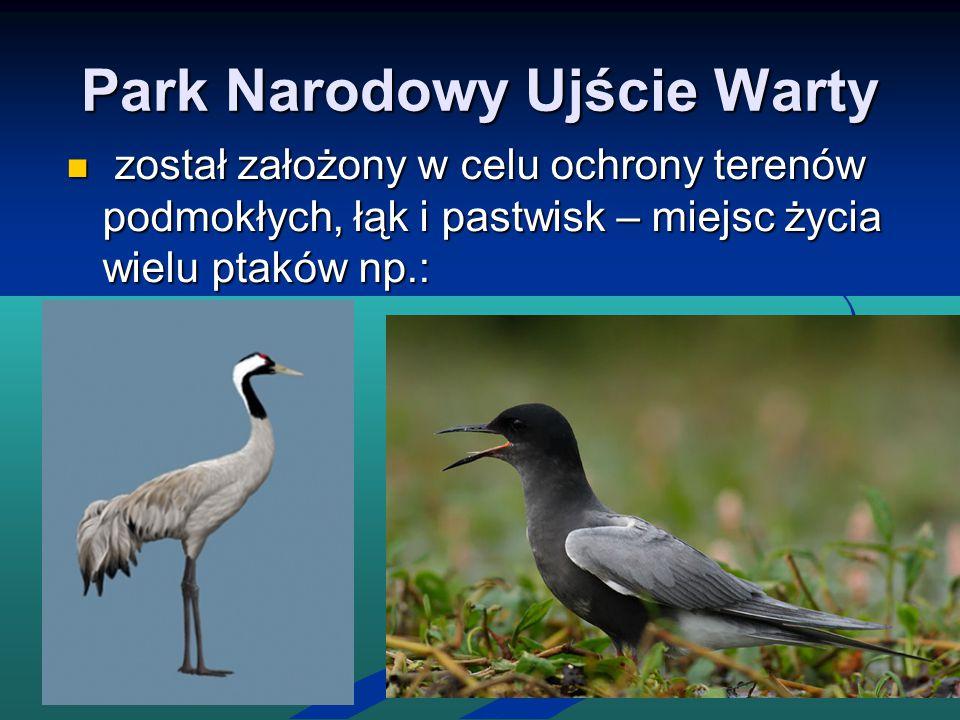 Park Narodowy Ujście Warty został założony w celu ochrony terenów podmokłych, łąk i pastwisk – miejsc życia wielu ptaków np.: został założony w celu o