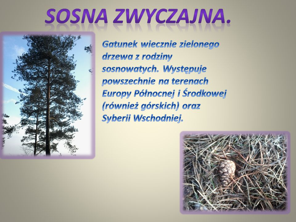 Wróbel jest ptakiem powszechnie znanym, ponieważ od tysiącleci związany był bezpośrednio z człowiekiem i żył wyłącznie przy jego siedzibach. Gniazdo w