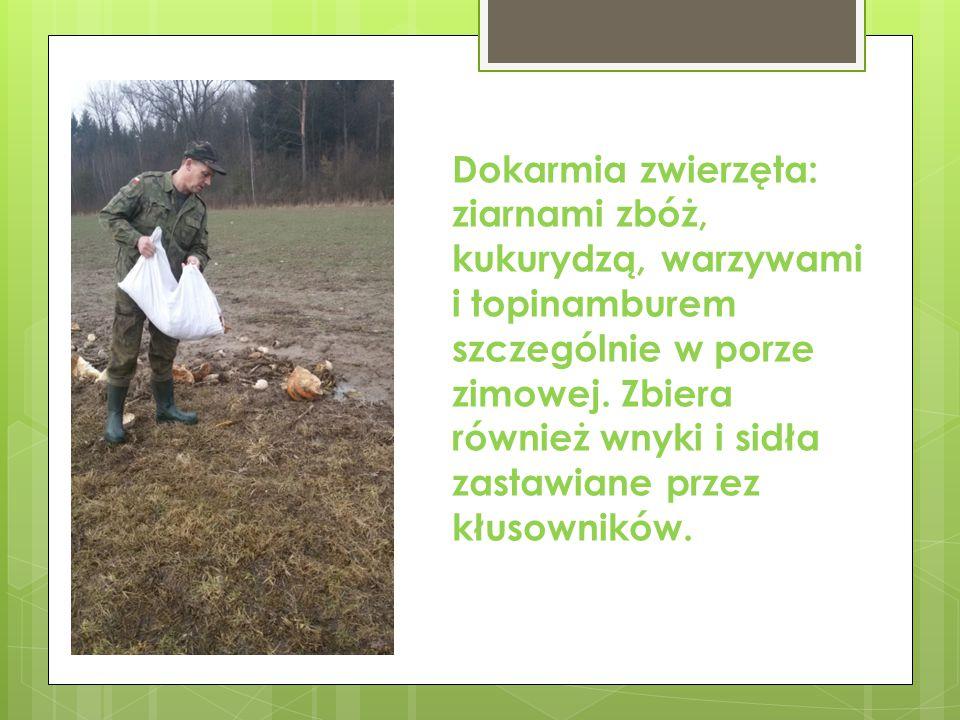 Dba o rezerwat, który stwarza warunki naturalne dla bobra, bociana czarnego i różnych płazów.