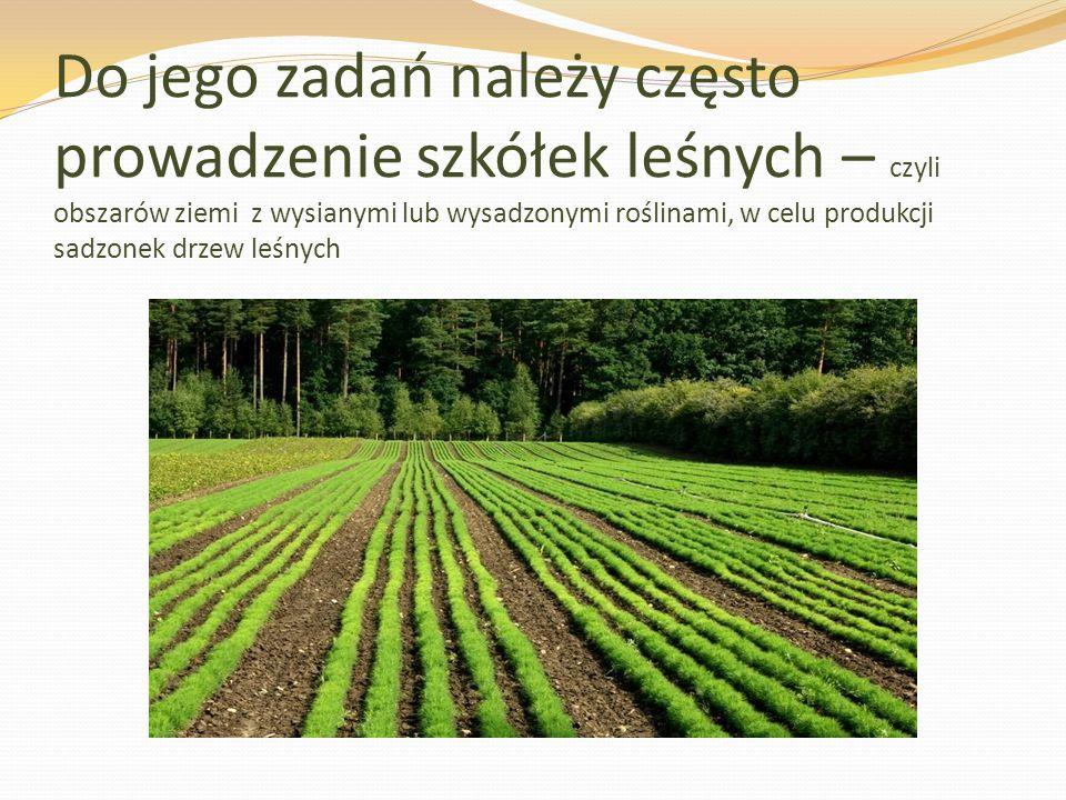 Do jego zadań należy często prowadzenie szkółek leśnych – czyli obszarów ziemi z wysianymi lub wysadzonymi roślinami, w celu produkcji sadzonek drzew leśnych