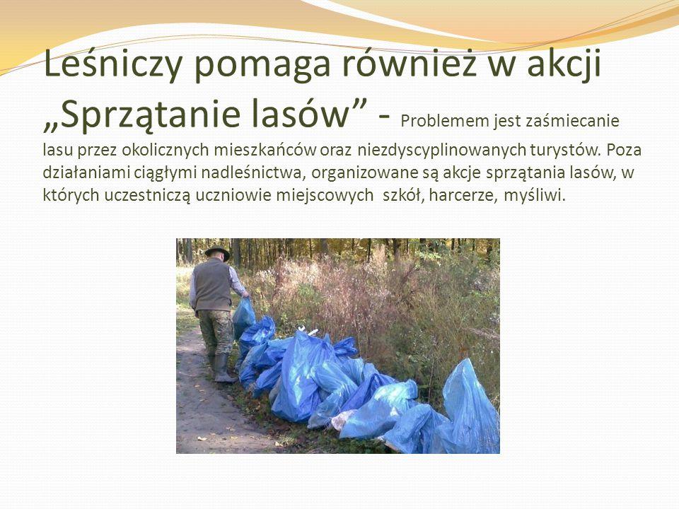 """Leśniczy pomaga również w akcji """"Sprzątanie lasów - Problemem jest zaśmiecanie lasu przez okolicznych mieszkańców oraz niezdyscyplinowanych turystów."""