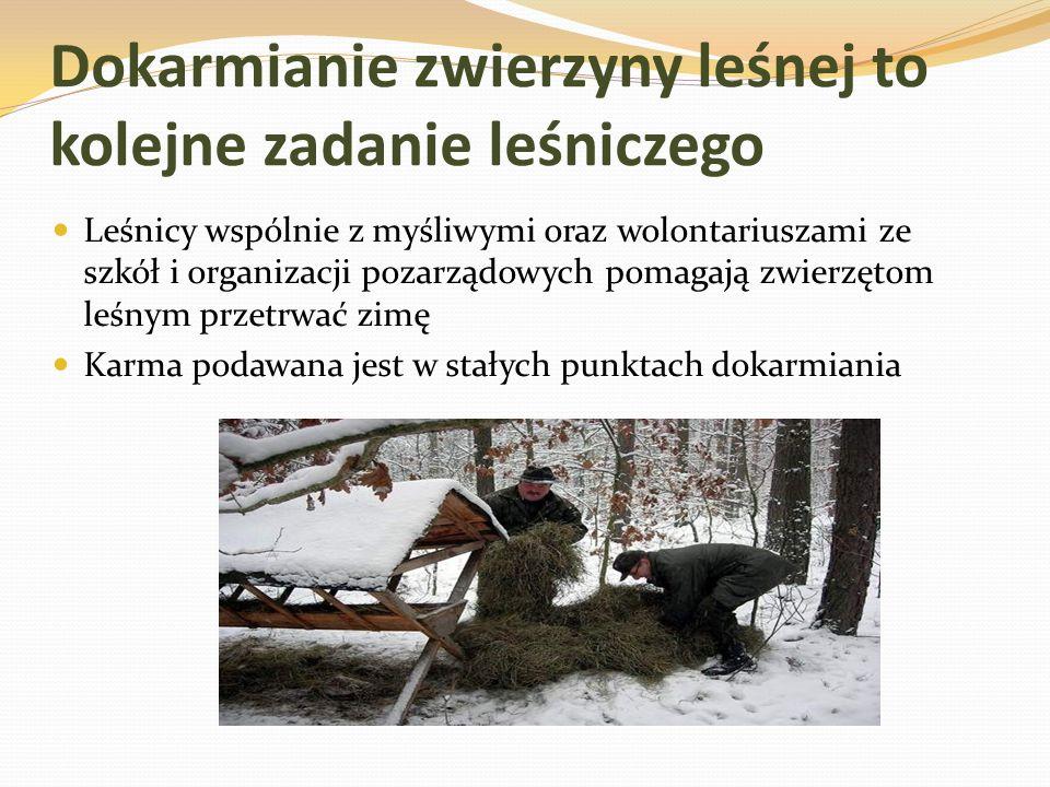 Dokarmianie zwierzyny leśnej to kolejne zadanie leśniczego Leśnicy wspólnie z myśliwymi oraz wolontariuszami ze szkół i organizacji pozarządowych pomagają zwierzętom leśnym przetrwać zimę Karma podawana jest w stałych punktach dokarmiania