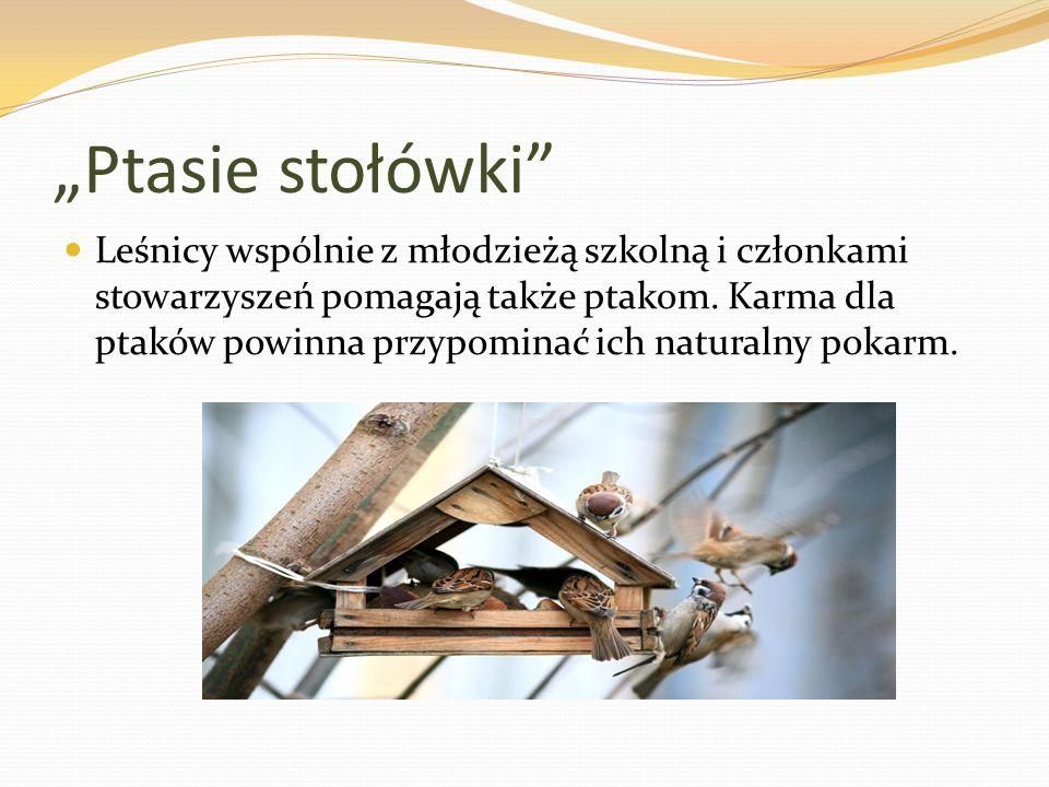 """""""Ptasie stołówki Leśnicy wspólnie z młodzieżą szkolną i członkami stowarzyszeń pomagają także ptakom."""