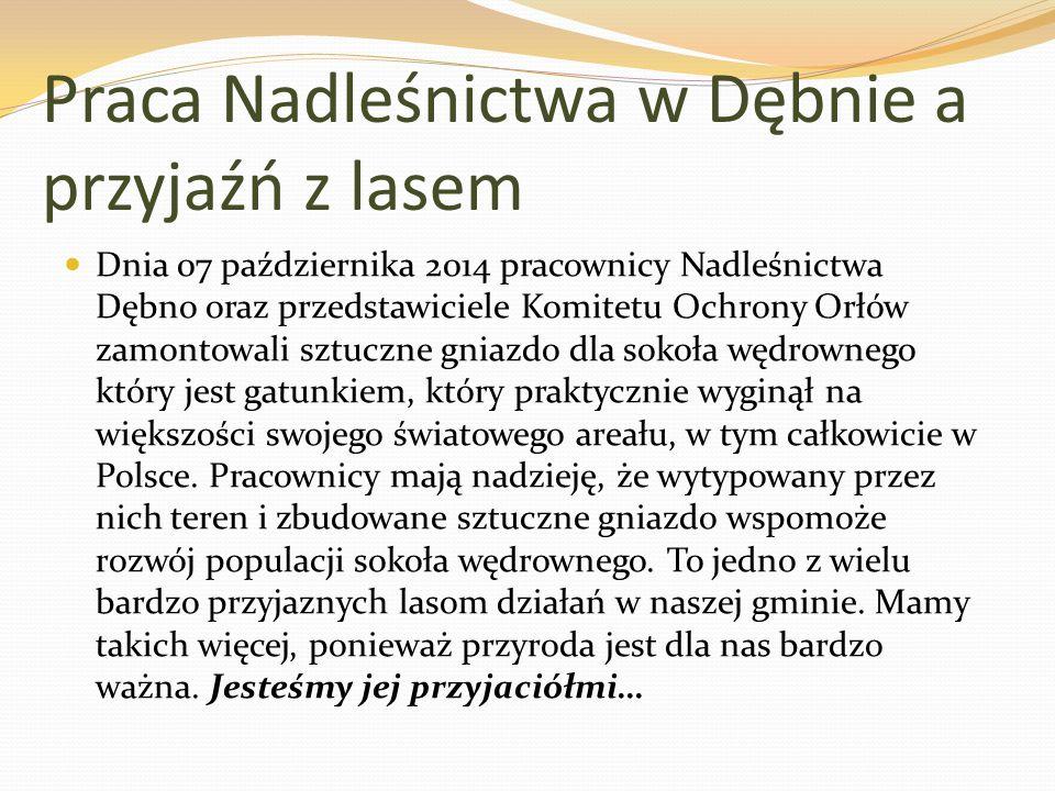 Praca Nadleśnictwa w Dębnie a przyjaźń z lasem Dnia 07 października 2014 pracownicy Nadleśnictwa Dębno oraz przedstawiciele Komitetu Ochrony Orłów zamontowali sztuczne gniazdo dla sokoła wędrownego który jest gatunkiem, który praktycznie wyginął na większości swojego światowego areału, w tym całkowicie w Polsce.