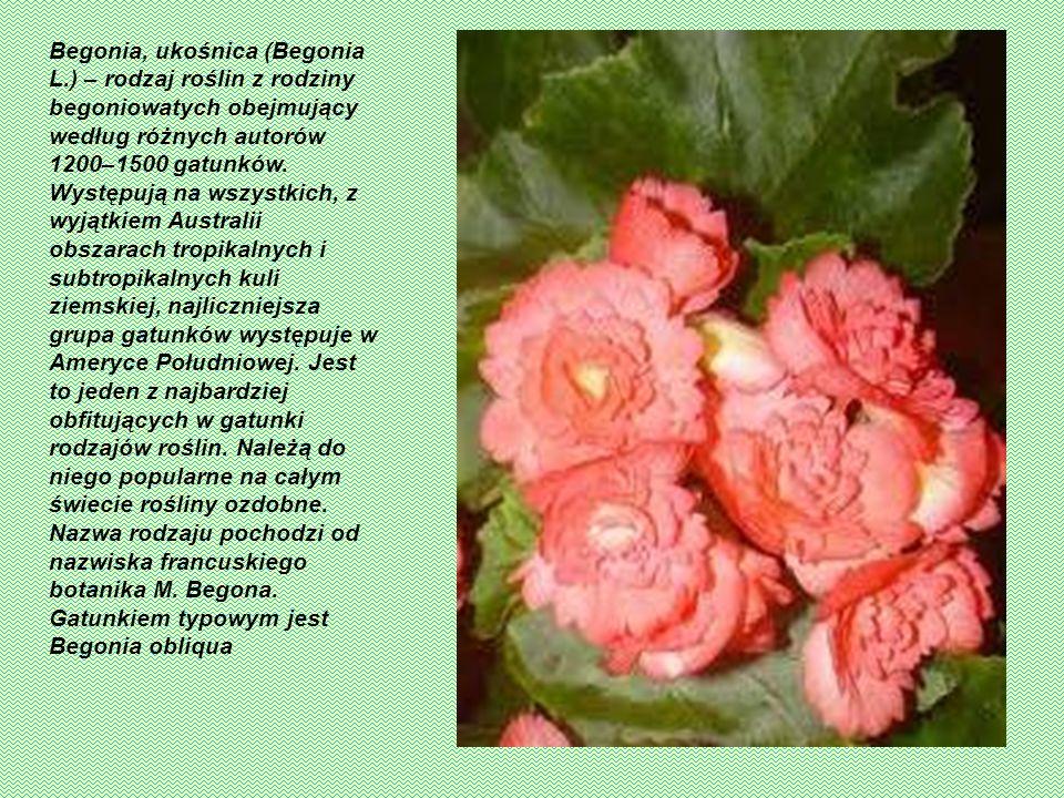 Proso (Panicum) – rodzaj roślin jednorocznych lub bylin należący do rodziny wiechlinowatych. Należy do niego ok. 500 gatunków występujących w strefie