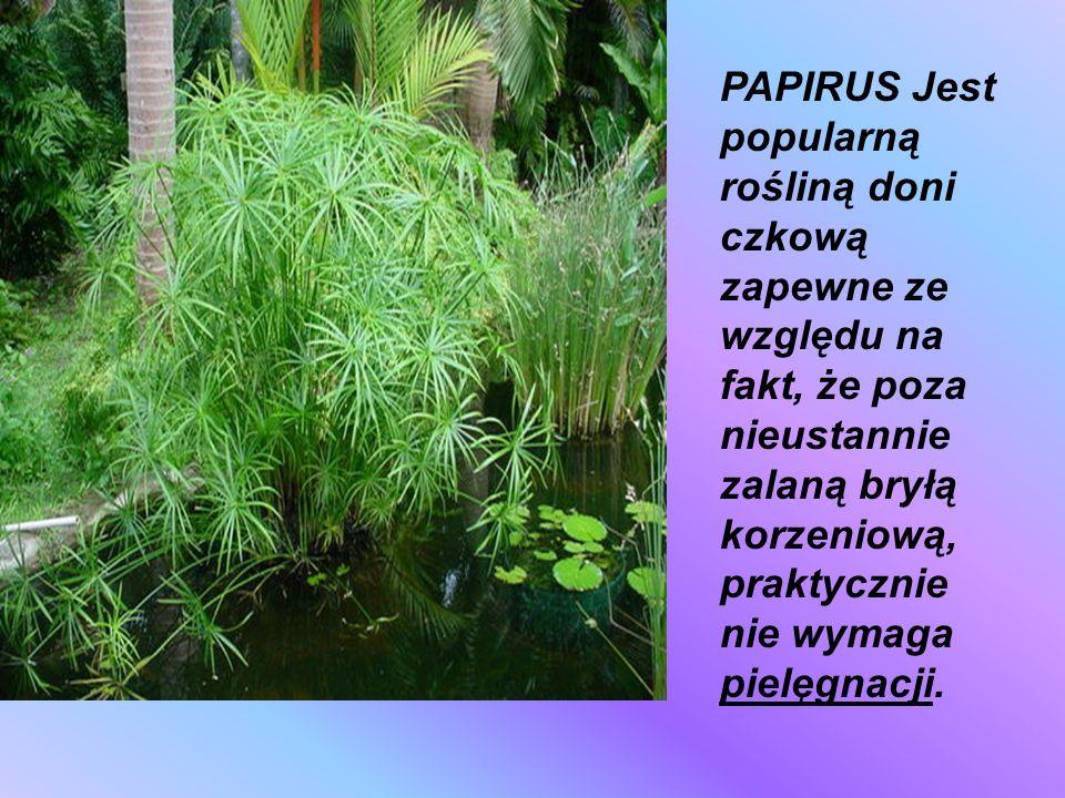 Jaśmin (Jasminum L.) – rodzaj roślin z rodziny oliwkowatych. Według niektórych ujęć taksonomicznych należy do niego ok. 200 gatunków pochodzących głów