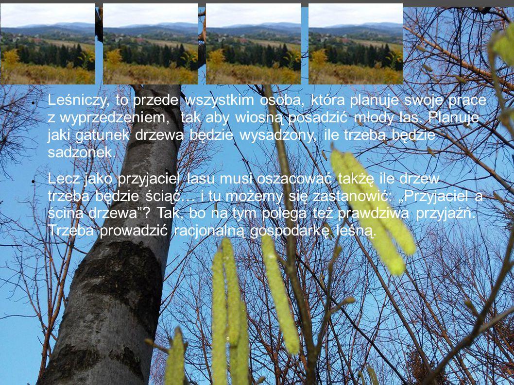 ●L●Leśniczy, to przede wszystkim osoba, która planuje swoje prace z wyprzedzeniem, tak aby wiosną posadzić młody las.