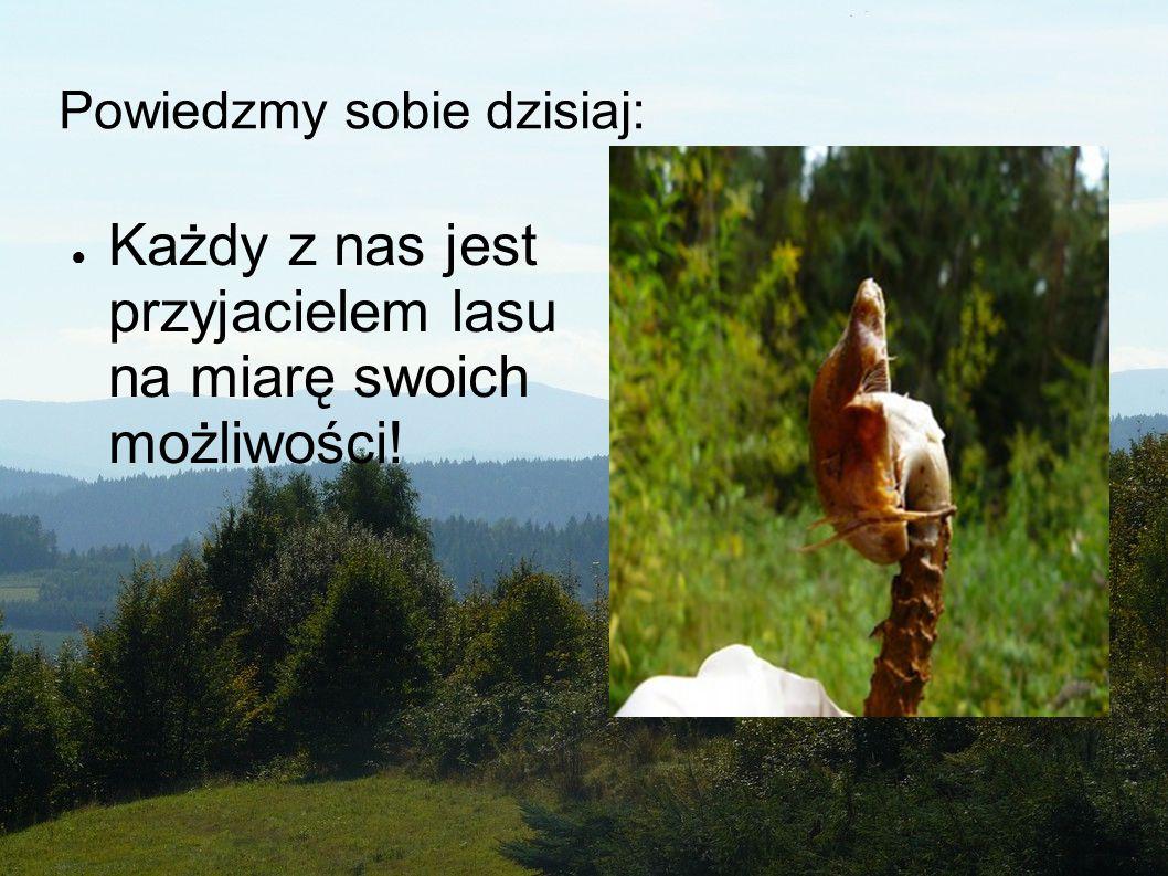 Powiedzmy sobie dzisiaj: ●K●Każdy z nas jest przyjacielem lasu na miarę swoich możliwości!