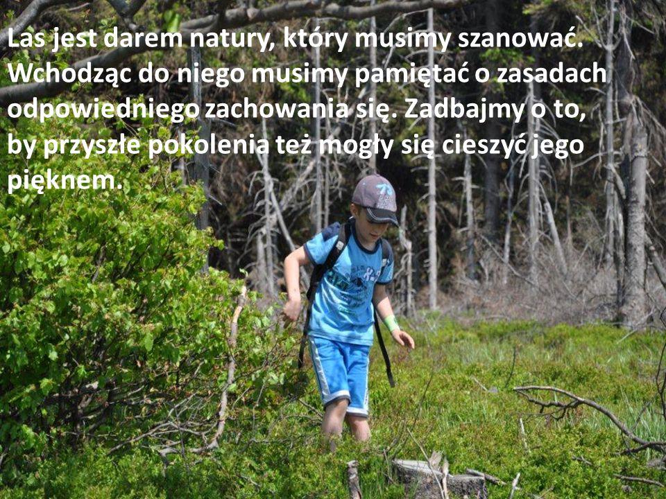 Las jest darem natury, który musimy szanować.