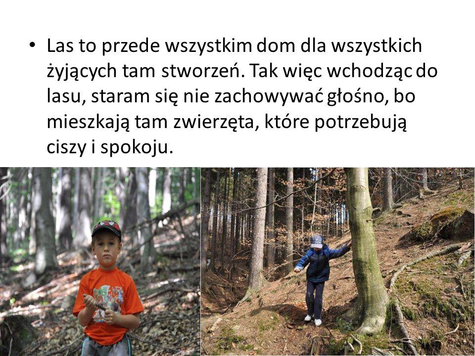 Las to przede wszystkim dom dla wszystkich żyjących tam stworzeń.