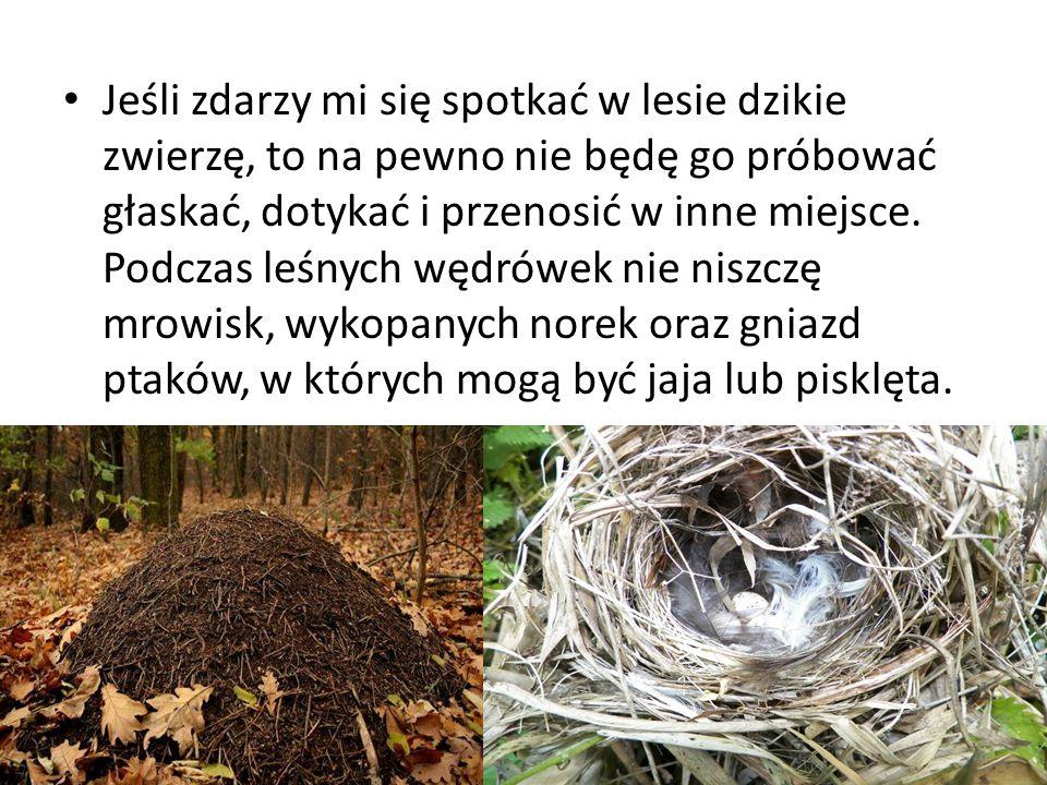 Jeśli zdarzy mi się spotkać w lesie dzikie zwierzę, to na pewno nie będę go próbować głaskać, dotykać i przenosić w inne miejsce.