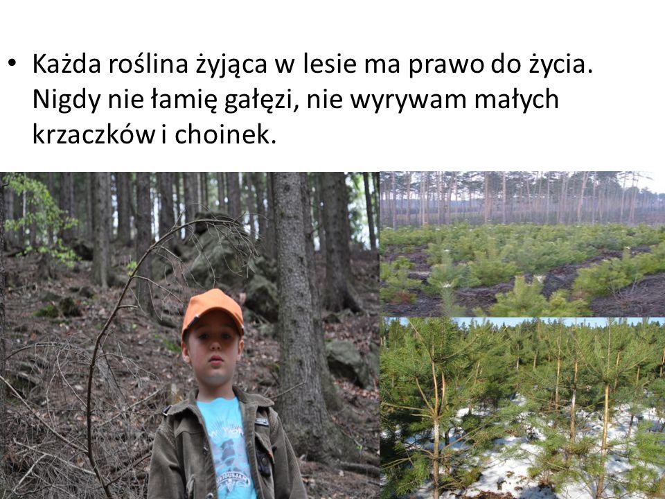 Każda roślina żyjąca w lesie ma prawo do życia.