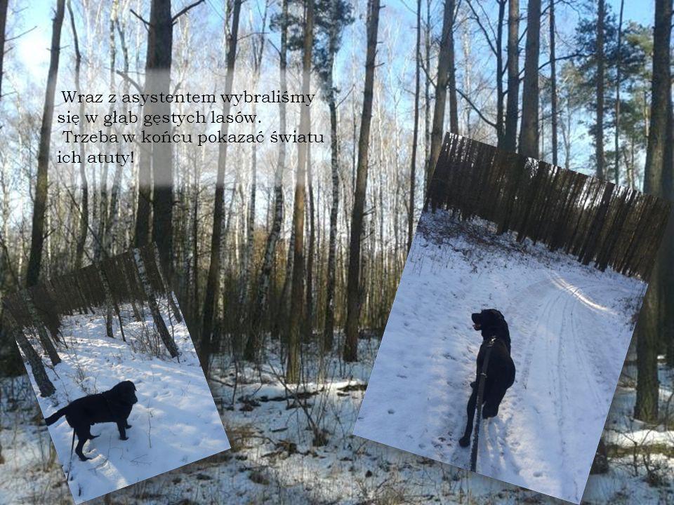 Wraz z asystentem wybraliśmy się w głąb gęstych lasów. Trzeba w końcu pokazać światu ich atuty!