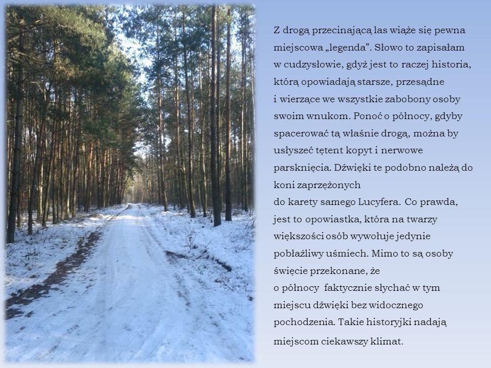 """Z drogą przecinającą las wiąże się pewna miejscowa """"legenda ."""