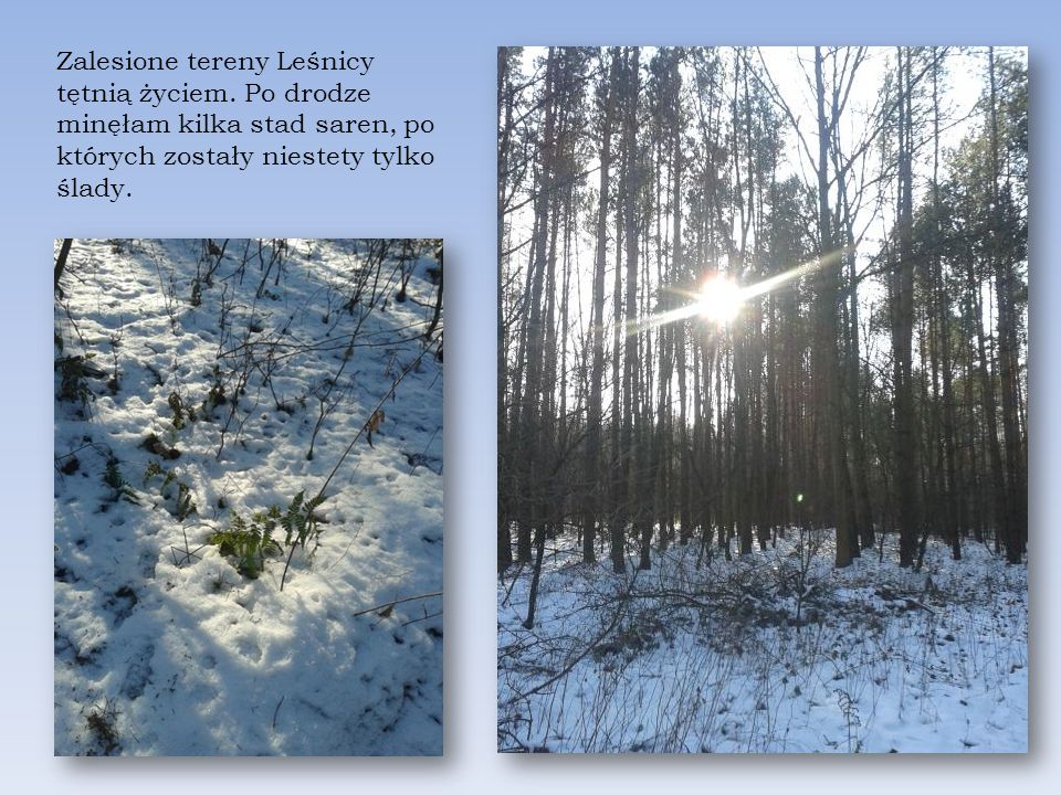 Zalesione tereny Leśnicy tętnią życiem.