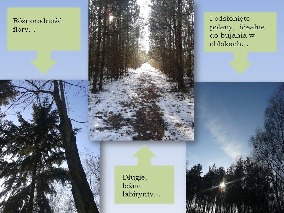 Różnorodność flory… Długie, leśne labirynty… I odsłonięte polany, idealne do bujania w obłokach…