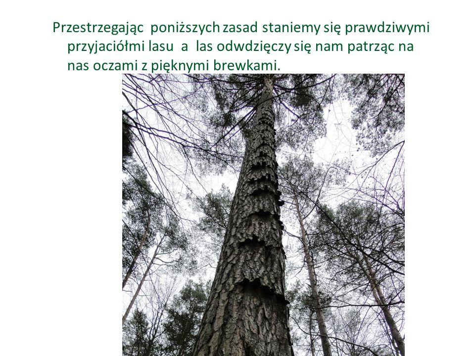 Przestrzegając poniższych zasad staniemy się prawdziwymi przyjaciółmi lasu a las odwdzięczy się nam patrząc na nas oczami z pięknymi brewkami.