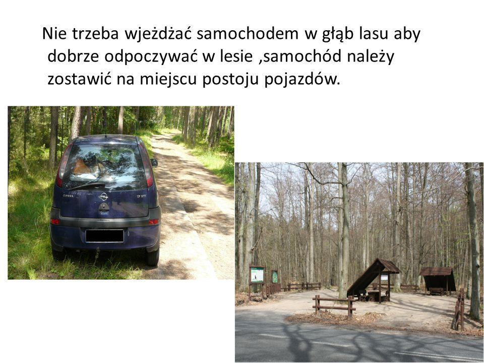 Nie trzeba wjeżdżać samochodem w głąb lasu aby dobrze odpoczywać w lesie,samochód należy zostawić na miejscu postoju pojazdów.