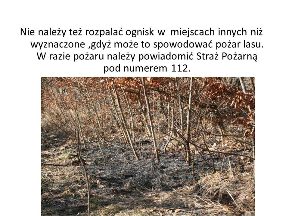 Nie należy też rozpalać ognisk w miejscach innych niż wyznaczone,gdyż może to spowodować pożar lasu. W razie pożaru należy powiadomić Straż Pożarną po