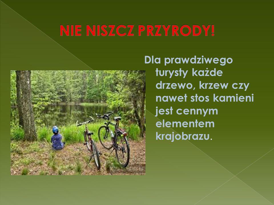 Dla prawdziwego turysty każde drzewo, krzew czy nawet stos kamieni jest cennym elementem krajobrazu.