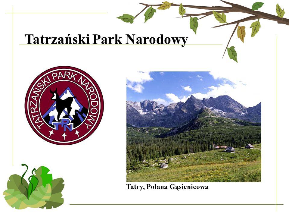 Tatry, Polana Gąsienicowa Tatrzański Park Narodowy