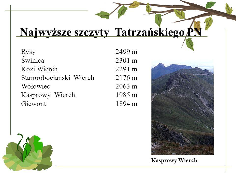 Rysy 2499 m Świnica 2301 m Kozi Wierch 2291 m Starorobociański Wierch 2176 m Wołowiec 2063 m Kasprowy Wierch 1985 m Giewont 1894 m Kasprowy Wierch Najwyższe szczyty Tatrzańskiego PN
