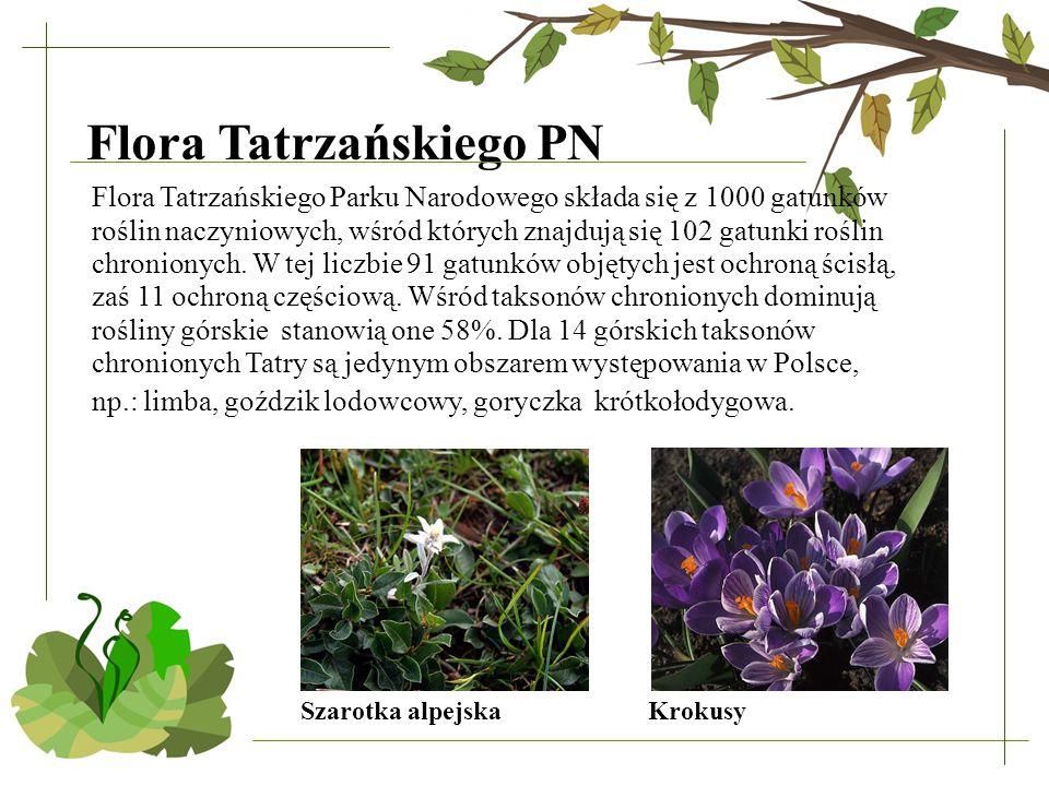 Flora Tatrzańskiego PN Flora Tatrzańskiego Parku Narodowego składa się z 1000 gatunków roślin naczyniowych, wśród których znajdują się 102 gatunki roś