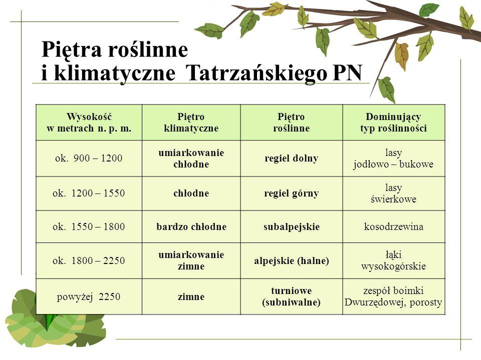 Piętra roślinne i klimatyczne Tatrzańskiego PN Wysokość w metrach n. p. m. Piętro klimatyczne Piętro roślinne Dominujący typ roślinności ok. 900 – 120