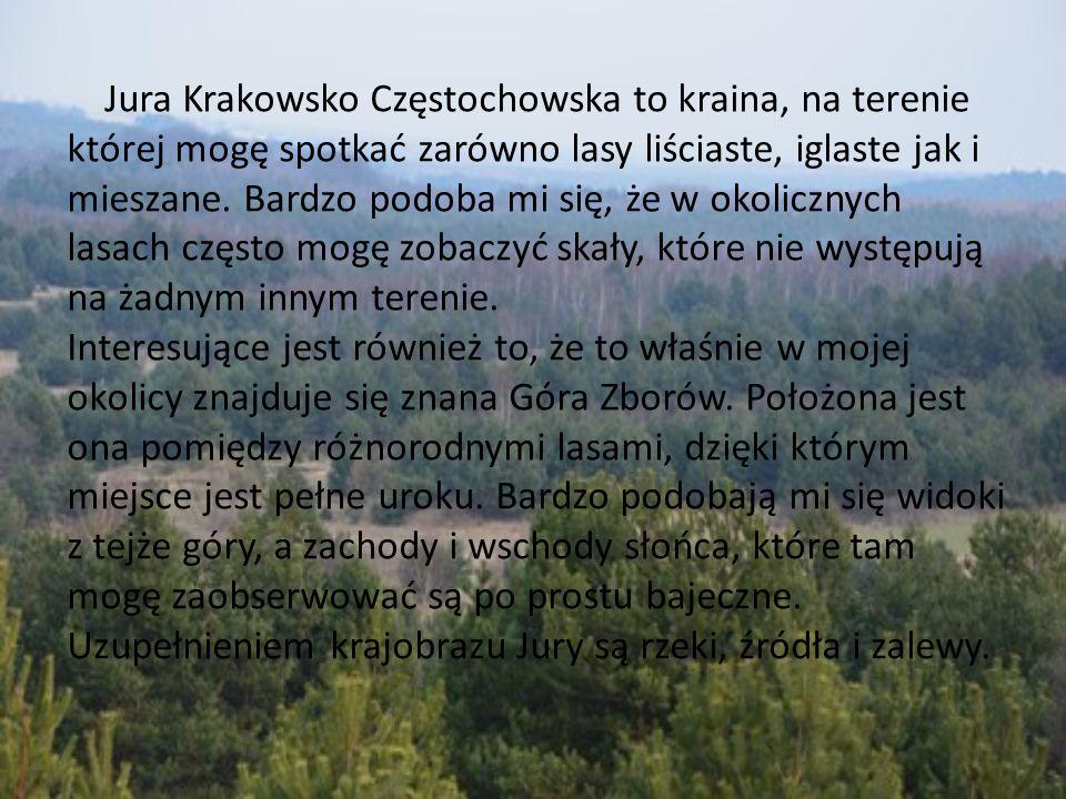 Jura Krakowsko Częstochowska to kraina, na terenie której mogę spotkać zarówno lasy liściaste, iglaste jak i mieszane. Bardzo podoba mi się, że w okol