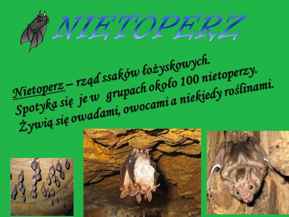 czarny Bocian - gatunek dużego ptaka brodzącego z rodziny bocianów. Spotyka się je w grupach. Ich pożywienie to m.in. : myszy, muchy, żaby. biały