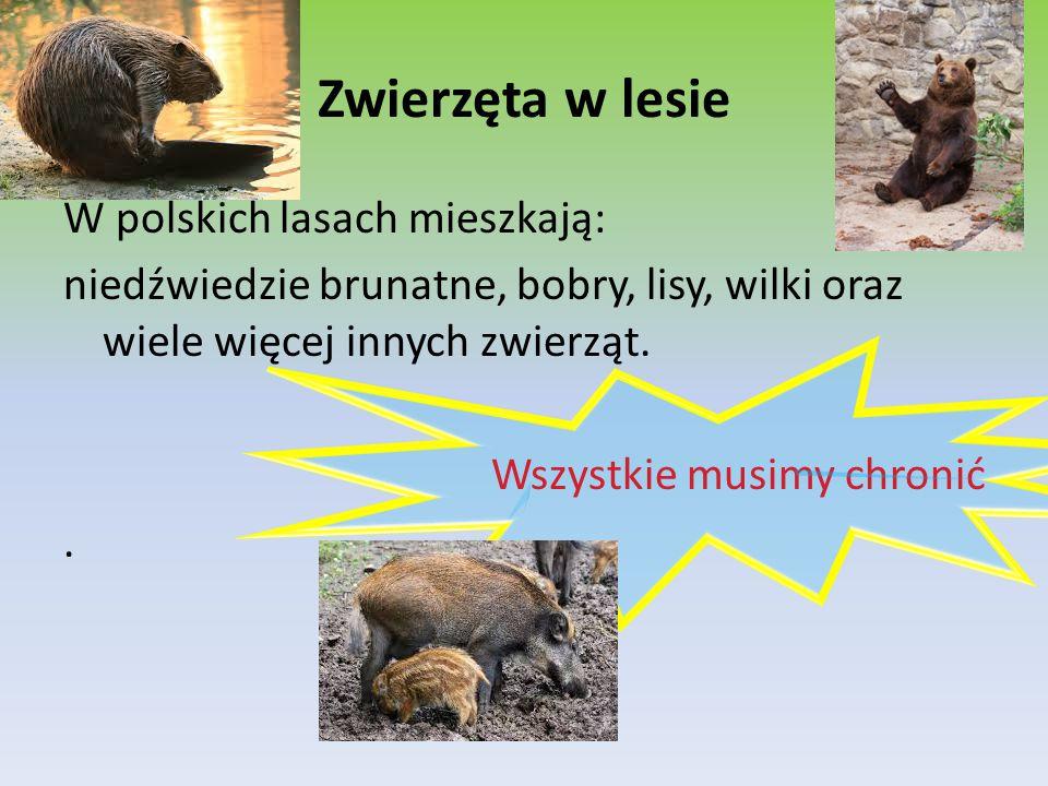 Zwierzęta w lesie W polskich lasach mieszkają: niedźwiedzie brunatne, bobry, lisy, wilki oraz wiele więcej innych zwierząt. Wszystkie musimy chronić.
