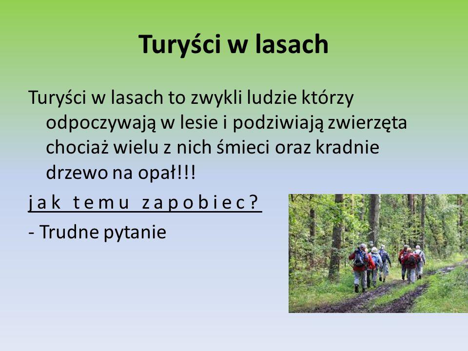 Turyści w lasach Turyści w lasach to zwykli ludzie którzy odpoczywają w lesie i podziwiają zwierzęta chociaż wielu z nich śmieci oraz kradnie drzewo n