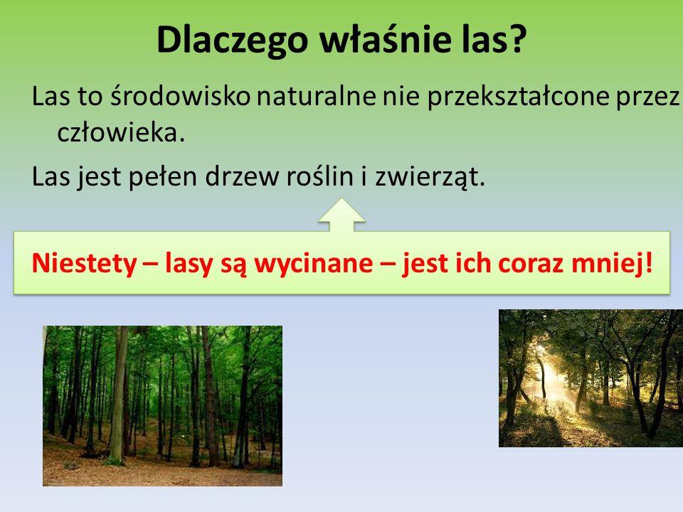 Dlaczego właśnie las? Las to środowisko naturalne nie przekształcone przez człowieka. Las jest pełen drzew roślin i zwierząt. Niestety – lasy są wycin
