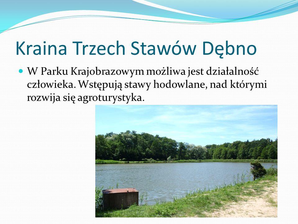 Kraina Trzech Stawów Dębno W Parku Krajobrazowym możliwa jest działalność człowieka. Wstępują stawy hodowlane, nad którymi rozwija się agroturystyka.