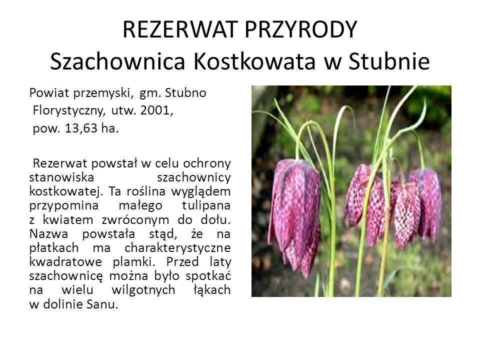 REZERWAT PRZYRODY Szachownica Kostkowata w Stubnie Powiat przemyski, gm. Stubno Florystyczny, utw. 2001, pow. 13,63 ha. Rezerwat powstał w celu ochron